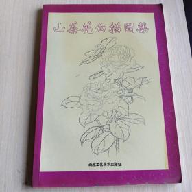 山茶花白描图集