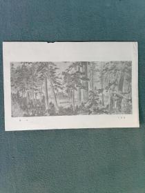 16开,50年代,名家(王仙圃)绘画【森林】
