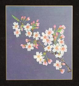 """【日本回流】原装旧裱 设色作品""""樱花""""一幅(纸本硬卡,画心约0.6平尺)HXTX199617"""