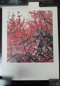 文革期间宣传画:俏不争春(中国画)    关山月 作   人民美术出版社出版    1974年4月一版一印  4开    XCH0115