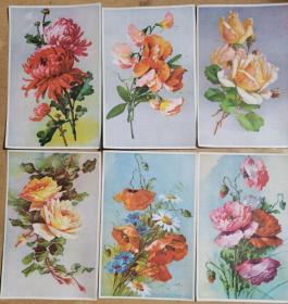 菊花、牡丹花、蝴蝶兰等花卉图片(6张)