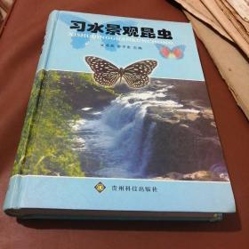 习水景观昆虫