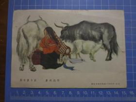 朝花美术出版社1955年刊行的原版贺年老画片:《藏女挤牛奶(詹建俊作)》【尺寸约:15厘米*10.4厘米】
