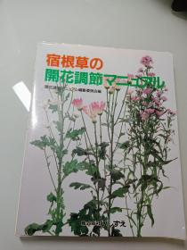宿根草 开花调节