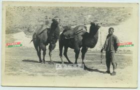 民国1931年5月18日北京城墙之下的骆驼祥子赶车把式老照片,可窥见当时城墙保存一般,局部比较斑驳了