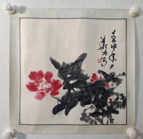 保真书画,金华林精美牡丹国画一幅,画心尺寸40.5×41cm ,纸本镜心。