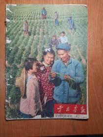云南画报 1961年第1期