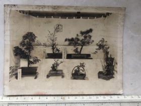 民国抗战时期日本盆景老照片