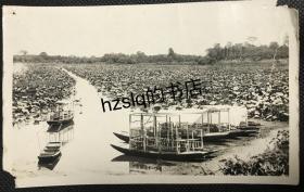 民国南京玄武湖各式游船及荷塘景色,老照片影像清晰,内容少见、颇为难得