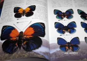 What is the most beautiful Butterfly in the world : Illustration book[975]-世界上最美丽的蝴蝶是什么?插图册[975]