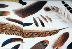 Beautiful Bird Feathers of the World : Illustration book Japanese[976]-世界上美丽的鸟羽毛:日本插图书[976]