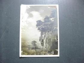 民国时期.风影.老照片.长10厘米.宽7.5厘米