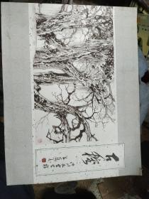 古榕 许川如写生稿