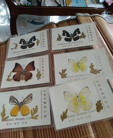 东南亚蝴蝶珍品6只(包邮)