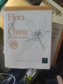 Flora  of china I11ustrations  7
