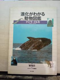 进化がわかる动物图鉴:クジラ·イルカ(日文原版书)大16开精装本