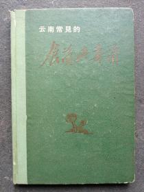 云南常见的食菌与毒菌(彩色版 一菌一图)61年1版1印 精装