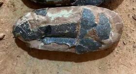 恐龙蛋化石,极为罕见的椭圆形恐龙蛋化石,长椭圆恐龙蛋,极为稀有,白垩纪椭圆形恐龙蛋化石,距今约1.5亿年,很难见到,已经玉化,包浆醇厚,沁色自然,神韵十足,恐龙蛋化石,化石器中之珍品,可遇不可求,难得一见