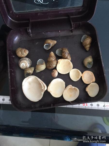 海螺 贝壳 摆件(图中17件合售)