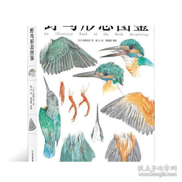 野鸟形态图鉴