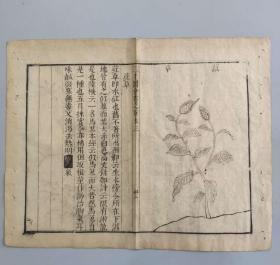 明代木刻本版画《三才图会》草木卷 红草图  长32厘米 宽24厘米 竹纸