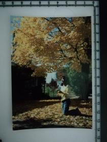 20201213-6 年代老照片  金色枫叶下的美女 甜 1988 这树叶和我衣服一个颜色