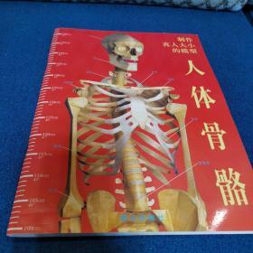 制作真人大小的模型 人体骨骼 晨光出版社