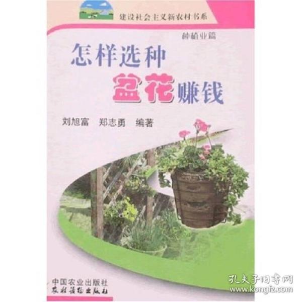 怎样选种盆花赚钱:种植业篇