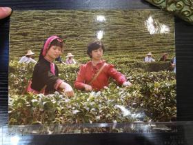 【老照片】采茶图 少数民族服装似贵州等地绿茶