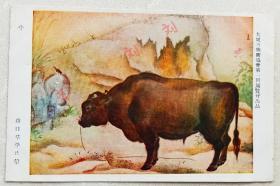 民国 日本美展明信片 牛年生肖明信片 田地里的水牛 山口草平画 品好