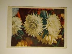 老明信片一枚(外国的,图案为花)