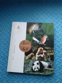 秦岭长青:野生生命的庇护所