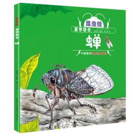 昆虫绘:夏季歌者—蝉