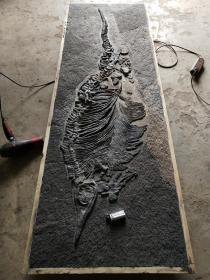 """鱼化石,生物化石,古生物化石,距今2.3亿年,史前三叠纪时期特大鱼化石,长达175厘米,比一个普通成年人还要高,品相极好,是目前全球发现最大的,品相最好的""""鱼化石"""",堪称""""博物馆级""""极品收藏,""""国宝级""""化石收藏,可谓可遇不可求的""""鱼化石""""珍品,孤品,神品,可做博物馆镇馆之宝,传家之宝,千年难得一遇,不可不收,不可再收您懂得"""
