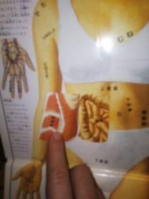 人体绘本 (意)朱利亚诺·弗娜芮 著;