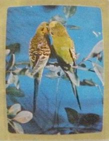 年历卡-1982年.鹦鹉.湖南美术出版社