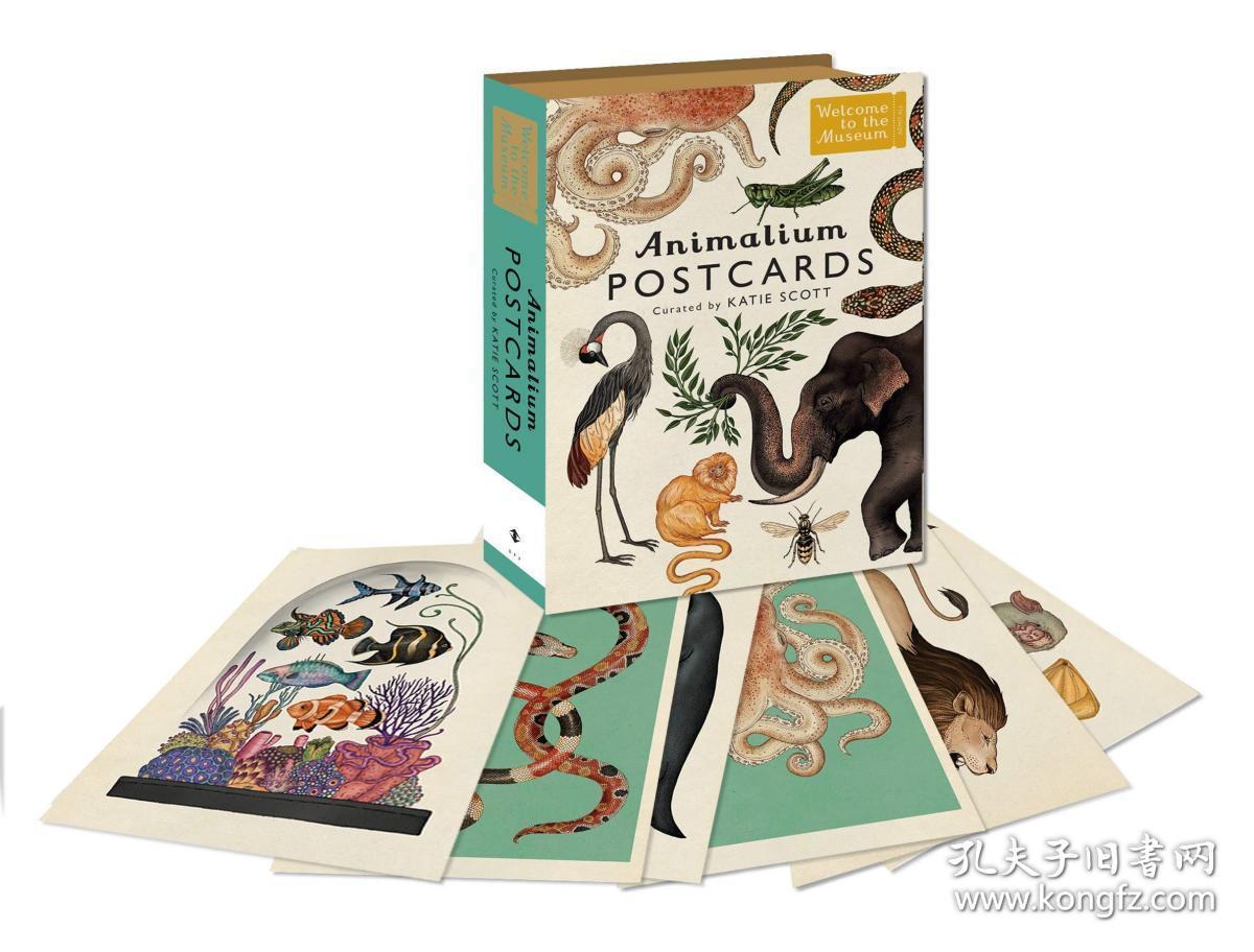 预售凯蒂斯科特欢迎来到博物馆动物王国插图明信片五十张盒装Animalium Postcards (Welcome To The Museum)