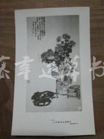 黑白照片一张:花卉(1982年上海画院迎春画展)王个移 绘画