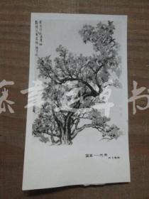 黑白照片一张:国画——花鸟(海粟 绘画)