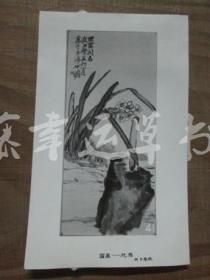 黑白照片一张:国画——花鸟(朱屺瞻 绘画)花卉