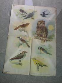 我们的好朋友  鸟类   挂图