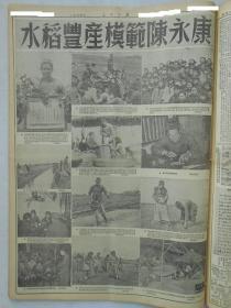 人民日报 有关 陈永康  水稻 生产 模范 相关内容 专题 报纸, 劳动 模范  大致 43份 人民日报   1951-1985年   50年代及60年代居多, 平均一份 65元, 可以挑选购买,根据所选年份内容再协商价格