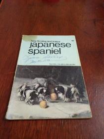 how to raise and traina Japanese Spaniel   如何饲养和训练日本猎犬
