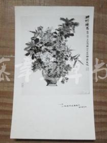 黑白照片一张:花卉(1982年上海画院迎春画展)