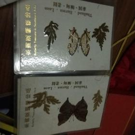 东南亚蝴蝶珍品20枚