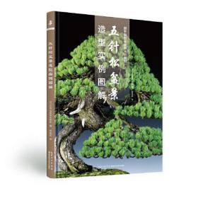五针松盆景造型实例图解