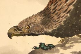 《沧海雄鹰》;日本回流字画 日本回流书画