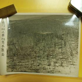 老照片-云门山上旱地育苹果苗