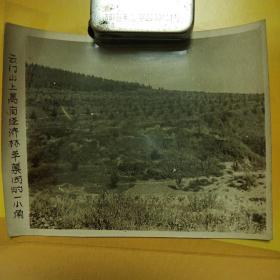 老照片-云门山上万亩经济林苹果园的一小角