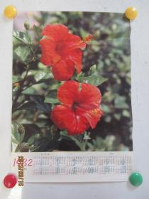 扶桑花——1982年年历画(山西人民出版社)